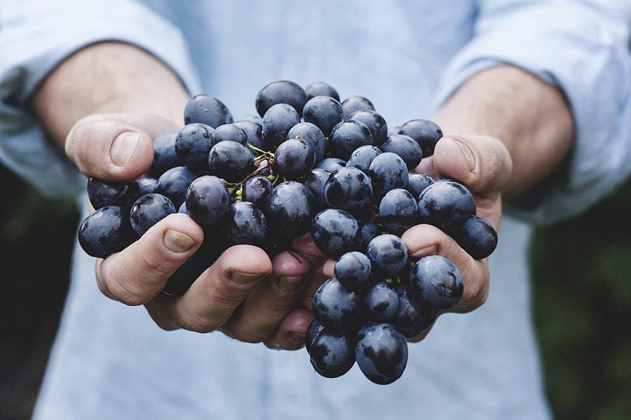 Fabrication vin bio
