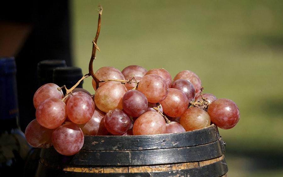 Un vin bio pour l'environnement